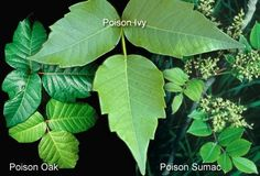 Know Your Poisonous Plants