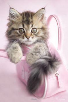 Cute Kittie <3