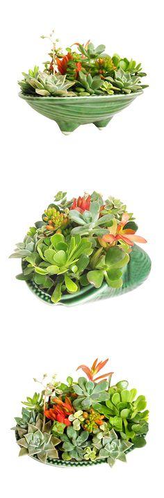 Succulent Garden Centerpiece | dotandbo.com