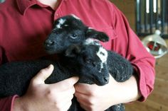 Juniper Moon Farm - Babies!