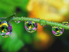 Colorful Drops