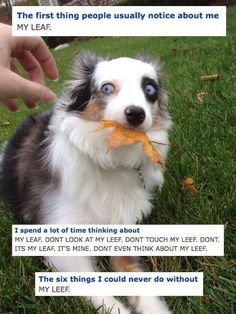 Don't touch my leaf.