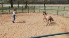 Clinton Anderson method for catching an anxious/disrespectful horse.