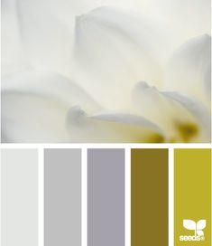 petal tones