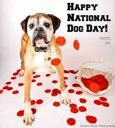 It's National Dog Day! #leo #puppymillsurvivor #nationaldogday