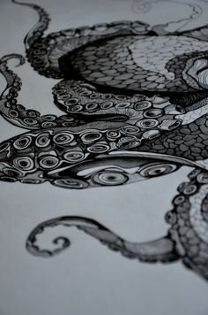 octopus. Absolutely beautiful line work #pen #ink #black #white #drawing