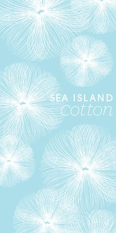 Pure white cotton flowing in fresh ocean air... #SeaIslandCotton