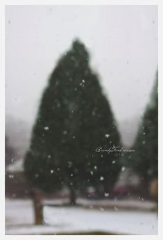 Snow fall Photo Dreamy Peaceful Snow Winter by BitsofLifeImages, $30.00