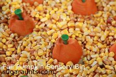 Egg Carton Pumpkins Fall Sensory Bin from Sugar Aunts