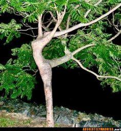 The Ballerina Tree