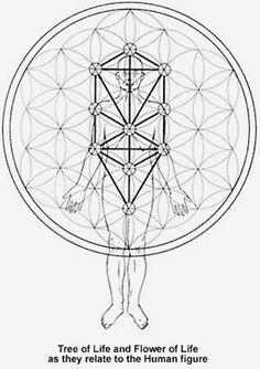 los chakras y el arbol de la vida