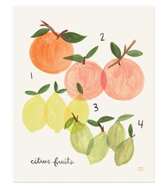Rifle Paper Co Citrus print