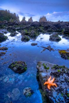 Shi Shi Beach, Olympic Peninsula, WA. JULY. I LOVE TIDEPOOLS
