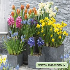 spring garden containers | Spring Container Garden for Patios and Balconies Project