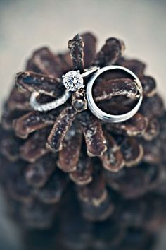 Pinecones display these rings perfectly. winter engagement, gold weddings, wedding ring photos, wedding ring shots, ring pictures, wedding rings, wedding planners, winter weddings, engagement rings