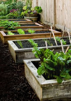 Growing food in small spaces. Go!