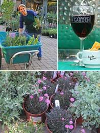#Santabarbarabotanicgarden Annual Spring and Fall Plant Sale at SBBG featuring California Native Plants!