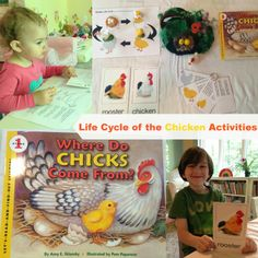 Natural Beach Living: Life Cycle of a Chicken Plus Egg Science
