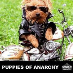 Puppies of Anarchy