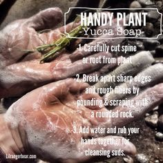 Handy Plant: Making Yucca Soap