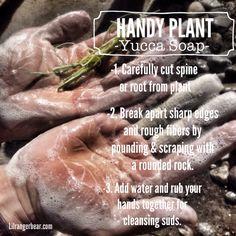Handy Plant: Making Yucca Soap