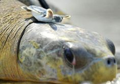 A 40-year-old mother and her 4-week-old child.