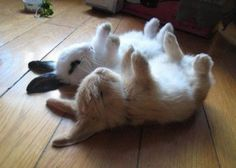 Nap time is the best. Bunny Rabbits Sleeping.