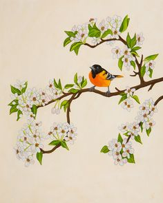 Baltimore Oriole, Little Bird Painting, Bird Art, Home Decor, Print on Wood on Etsy, $28.00
