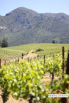 A winemaker's view of the vineyards.