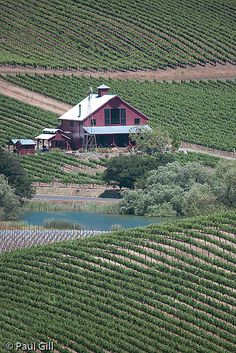 Napa Valley vineyards and barn, CA