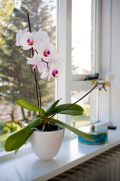 orchids are beautiful.