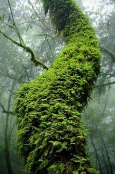 nun's fern growing on a tree