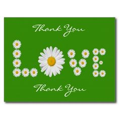 Daisies Love Thank You Postcard