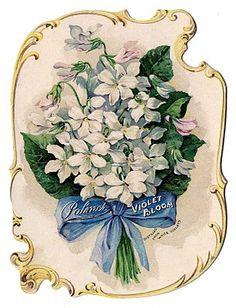 Vintage violets perfume ad
