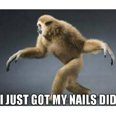 I just got my #nails did!  Who'd knew a primate could say it all!  #monkey #meme