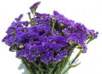 Bulk Statice.  Starting at $97.95  Common Name: Statice    Description: Narrow stalks branch off into many slender stems with tiny strawlike flowers.