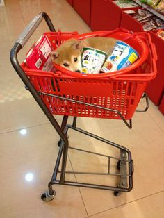 The Daily Laughs: Photo  hey mom can you pick me up a shiba inu while you're at the grocery store