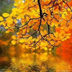 Autumn Photography | Autumn Scenes | Fall Leaves Pictures