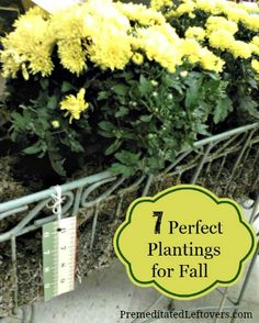 Here are several flowers that you can enjoy this fall and bulbs that you should plant now to enjoy next spring.