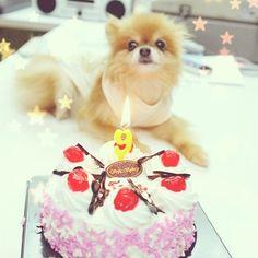 Happy Birthday to you   Happy Birthday to you  Happy Birthday dear MOGU  Happy Birthday to you~!   HBD dear Mogu...9th anniversary - @taluggy_mogu- #webstagram