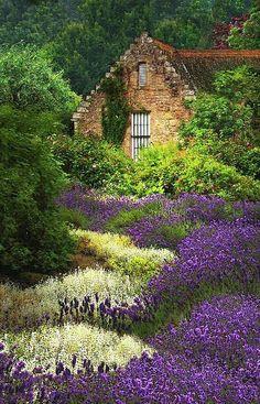 Cottage with Lavende Beautiful Lavender Fields, Cottage Gardens, Dream, Digital Art, Art Prints, Cottages, Hous, Place, Flower