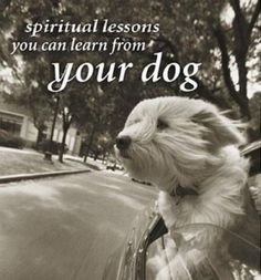 5 Spiritual lessons you can learn from your dog