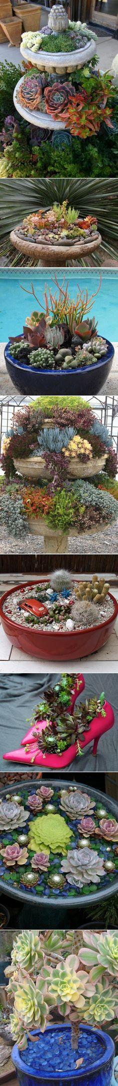 Indoor And Outdoor Succulent Garden Ideas