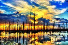 chauvin, LA Swamp Susnet - Pixdaus