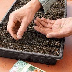 Gardener's To-Do List for February