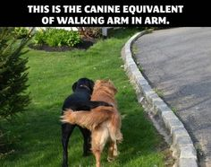 This is the canine equivalent of walking arm in arm.