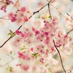 Spring blooms!