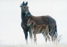Wild Mustang & Colt