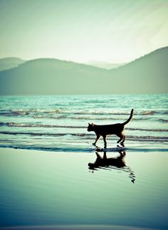 Your right it is a cat in water
