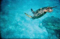 Swim with sea turtles.
